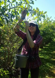 Fruit Recovery Program